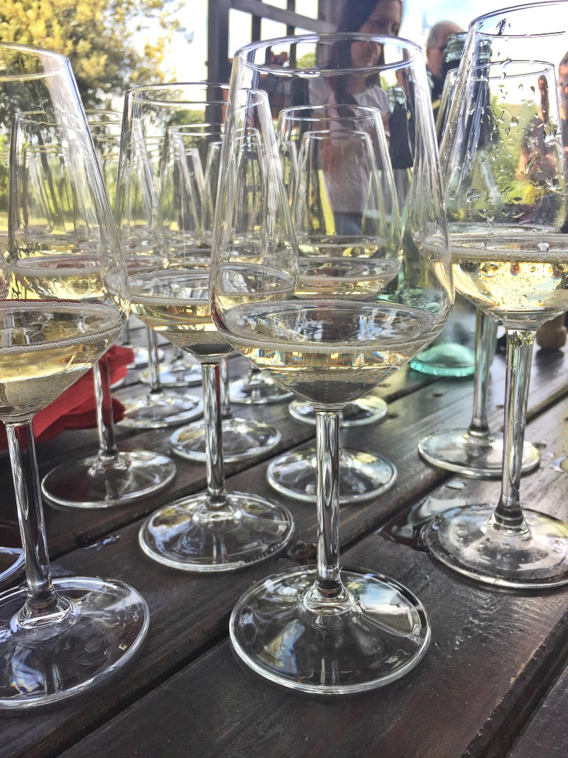 Wine tasting time at Geminiani winery